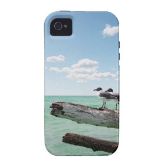 Two seagulls sitting on a dead tree sticking out vibe iPhone 4 cover