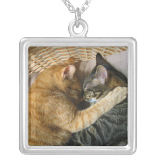 Two Sleeping Tabby Cats Cuddling Jewelry