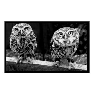 Two Small Owls Black and White Canvas Poster