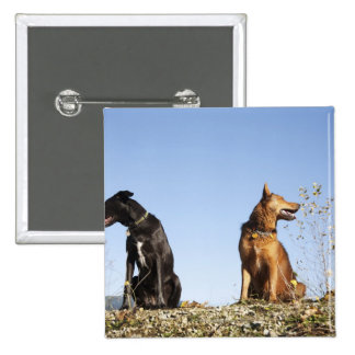 Two young dogs looking in opposite directions. 15 cm square badge