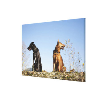 Two young dogs looking in opposite directions. gallery wrap canvas