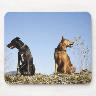 Two young dogs looking in opposite directions. mouse pad