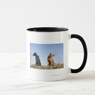 Two young dogs looking in opposite directions. mug