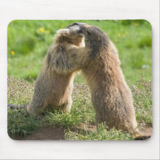 two young marmots mouse pad