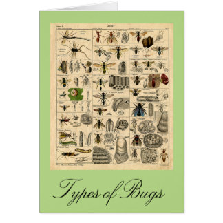Types of Bugs Vintage Insect Chart Card
