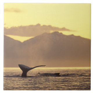 U.S.A., Alaska, Inside Passage Humpback whale at Large Square Tile