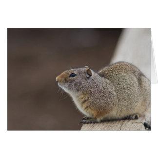 Uinta Groud Squirrel Card
