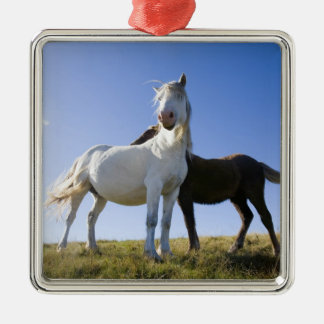 UK, Wales, Brecon Beacons NP. Wild Pony Christmas Ornament