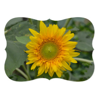 Ukranian Sunflowers Card