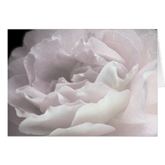 Ultra Pale Pink Rose Petals, Blank Greeting Card