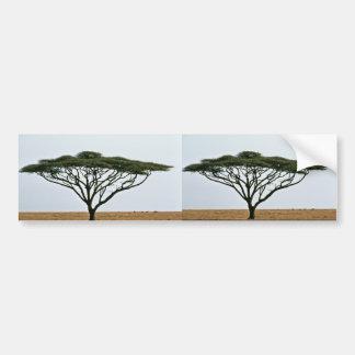 Umbrella Thorn Acacia Tree Bumper Sticker