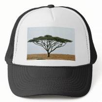Umbrella Thorn | Acacia tortilis | Southern Africa