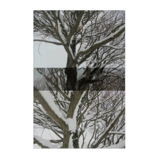 Under the snow. Branches Acrylic Print
