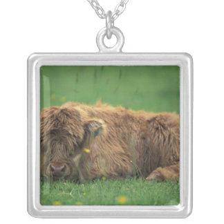 United Kingdom, Scotland. Highland calf Silver Plated Necklace