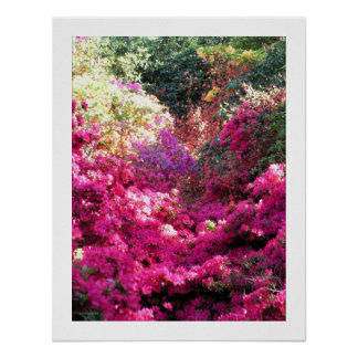 UNTITLED Rhododendron Floral Photography Poster
