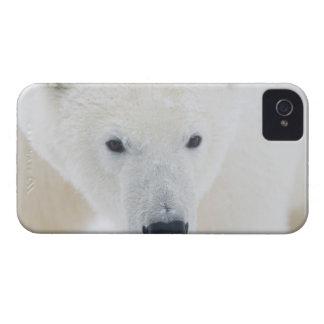 USA, Alaska, 1002 Coastal Plain of the Arctic 3 iPhone 4 Case-Mate Case