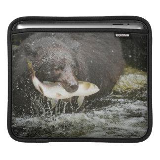USA, Alaska, Anan Creek. Close-Up Of Black Bear Sleeves For iPads
