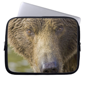 USA. Alaska. Concentration-A coastal brown bear Laptop Sleeve