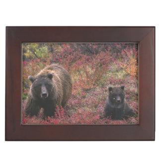 USA, Alaska, Denali National Park. Grizzly bear Keepsake Box