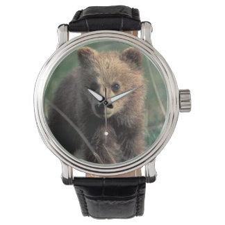 USA, Alaska, Denali National Park, Grizzly Watch