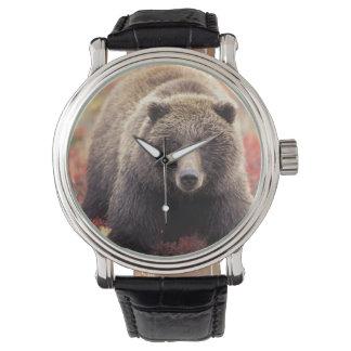 USA, Alaska, Denali NP, female Grizzly Bear Watch