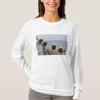 USA, Alaska, Kachemak Bay, Homer Spit. Bald T-Shirt