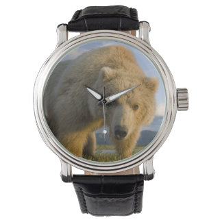 USA, Alaska, Katmai National Park, Brown Bear 3 Watch