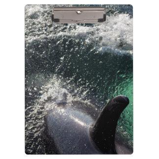 USA, Alaska, Tenakee Springs. Orca Clipboards