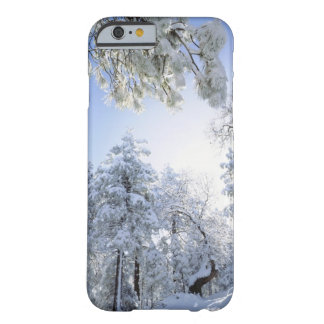 USA, California, Cleveland National Forest, Barely There iPhone 6 Case