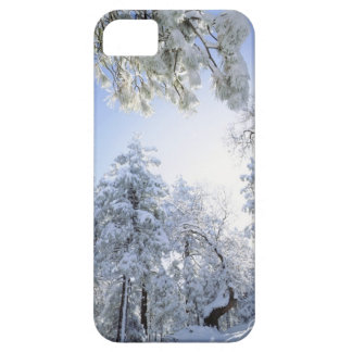 USA, California, Cleveland National Forest, iPhone 5 Cover