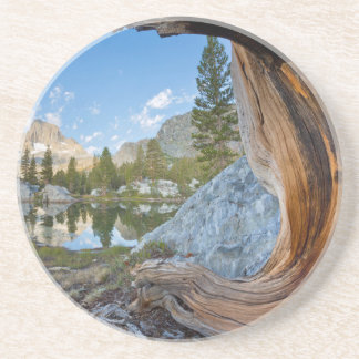 USA, California, Inyo National Forest. Old Pine Coaster