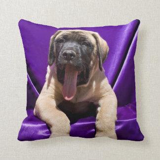 USA, California. Mastiff Puppy In Purple Cushion