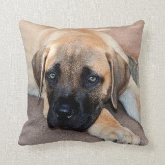 USA, California. Mastiff Puppy Lying On Cement Cushion