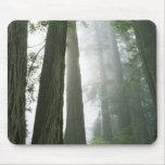 USA, California, Redwood National Park, Mouse Pad