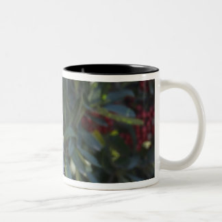 USA - California - San Diego - Cedar Waxwing Two-Tone Coffee Mug