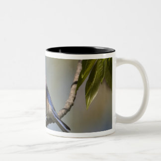 USA - California - San Diego County - male Two-Tone Coffee Mug