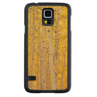USA, Colorado. Aspens In Gunnison National Carved Maple Galaxy S5 Case