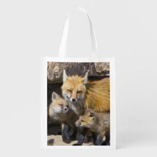 USA, Colorado, Breckenridge. Red fox mother 4 Reusable Grocery Bag