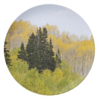 USA, Colorado, Gunnison National Forest, along 2 Plate