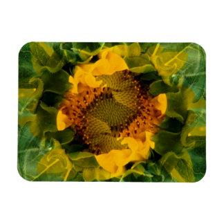 USA, Colorado, Lafayette. Sunflower montage Magnet