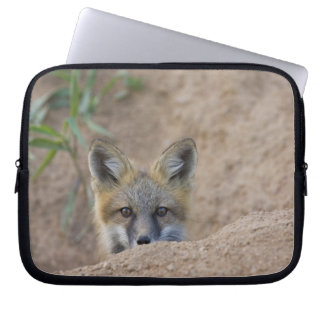 USA, Colorado, Pike National Forest. Shy red fox Laptop Sleeve