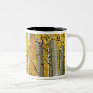 USA, Colorado, Rocky Mountains.  Intimate aspen Two-Tone Coffee Mug