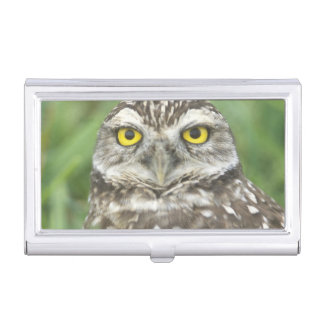 USA, Florida, Cape Coral, Burrowing Owl (Athene Business Card Holder