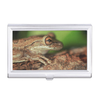 USA, Florida, Cuban Tree Frog. Business Card Holder