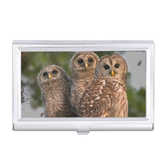 USA, Florida, Viera Wetlands. Three barred Business Card Holder