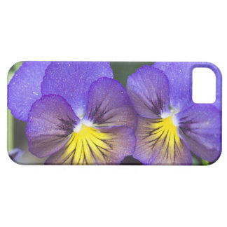 USA, Georgia, Pine Mountain. A closeup of pansy iPhone 5 Cases