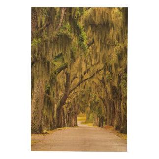 USA, Georgia, Savannah, Entrance Drive Wood Canvases