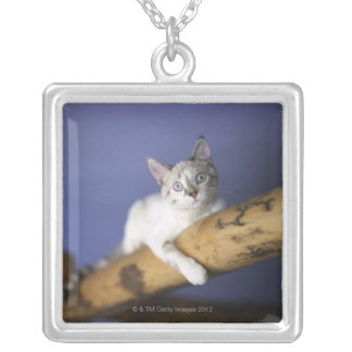 USA, Iowa, Portrait of young kitten Silver Plated Necklace