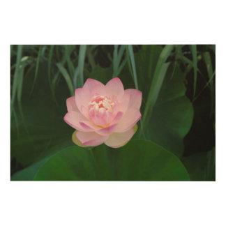 USA, Kansas, Pink Water Lilly Wood Print