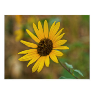 USA, Kansas, Sunflower Close-Up Print